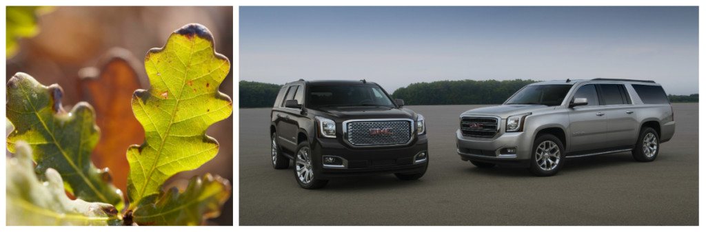 Some vegetation was harmed in the driving of these GMC SUVs.