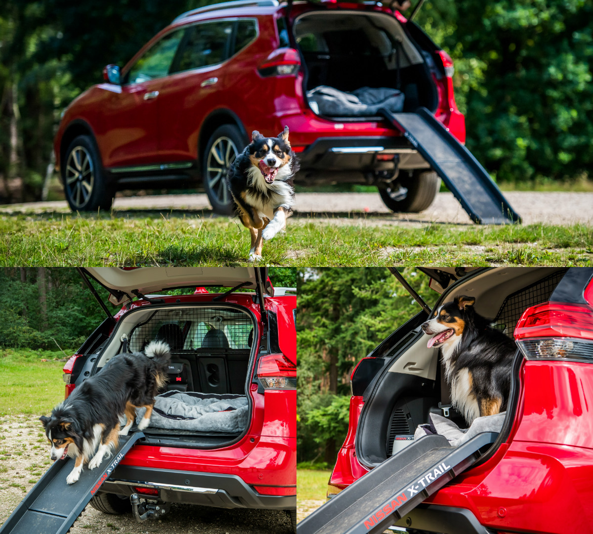 Nissan X Trail For Dogs >> Nissan X-Trail's new 'Paw Pack' | Torque