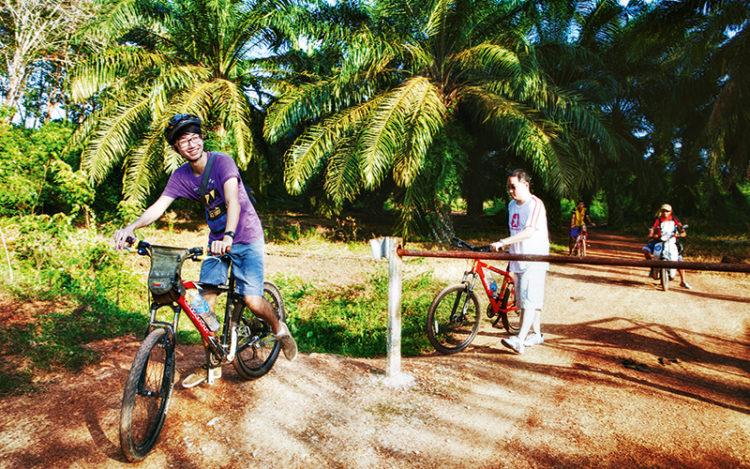 diesel-diet-cycling