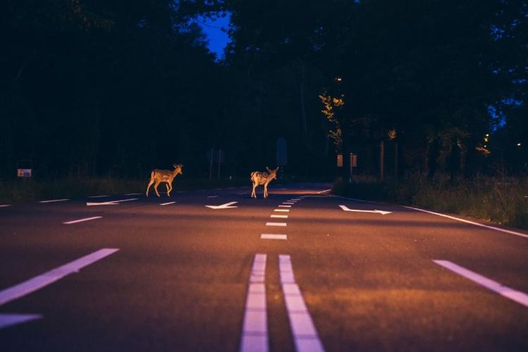 road trip dangers animals crossing