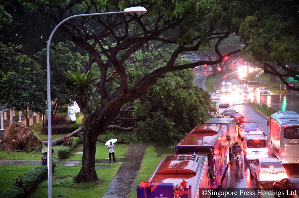 safe driving fallen tree